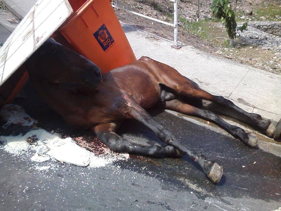 Moradores pedem ajuda para socorrer cavalo ferido na fazendinha