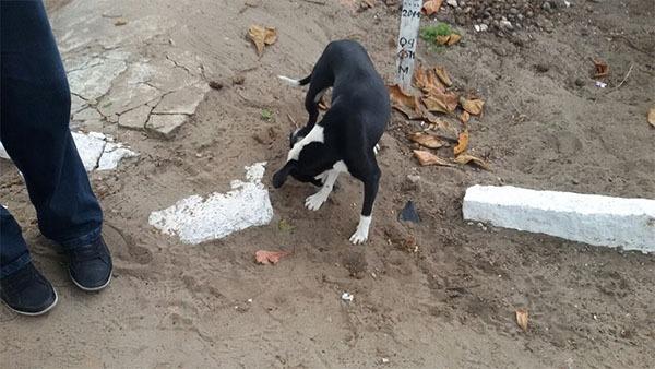 """MPE flagra cachorro se """"divertindo"""" com ossos humanos em cemitério de Maceió"""
