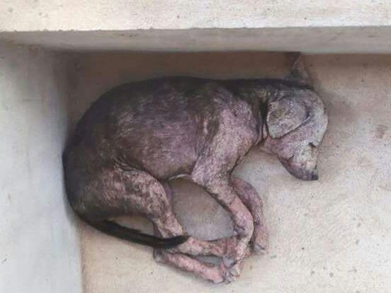 Cães são encontrados mortos dentro de sacolas no Conjunto José Tenório, em Maceió