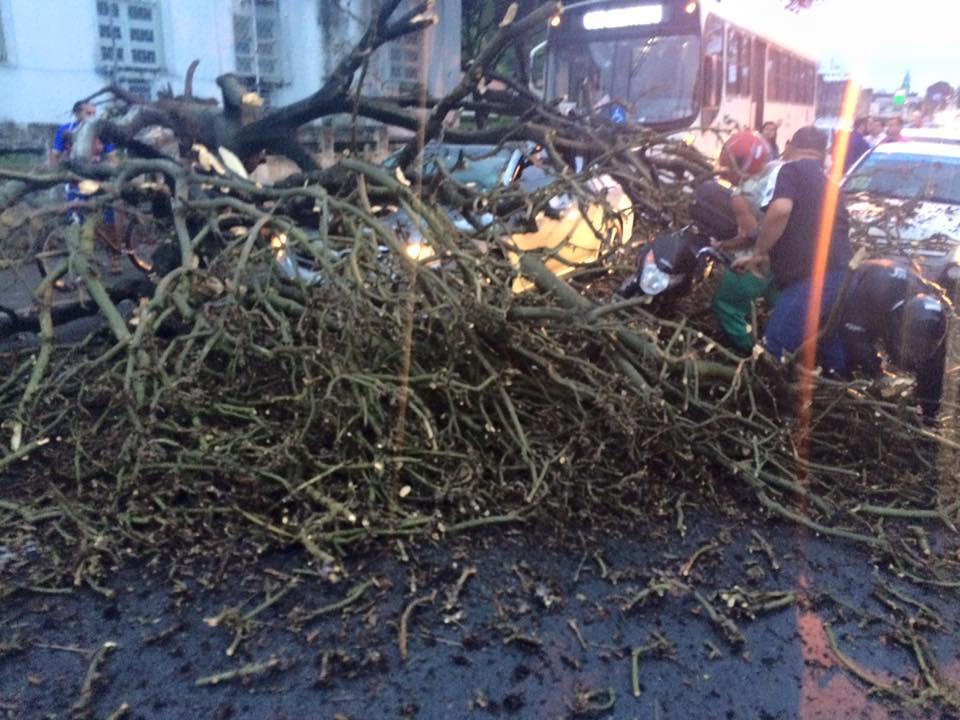 No Poço, árvore cai e deixa trânsito complicado