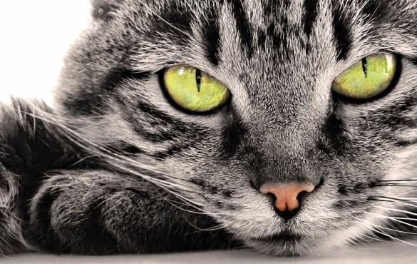 Gatos Gratos