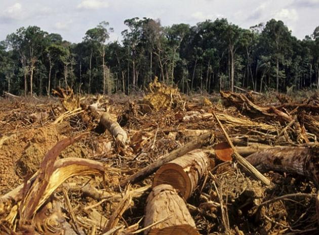 Destruição de florestas não é sinônimo de desenvolvimento