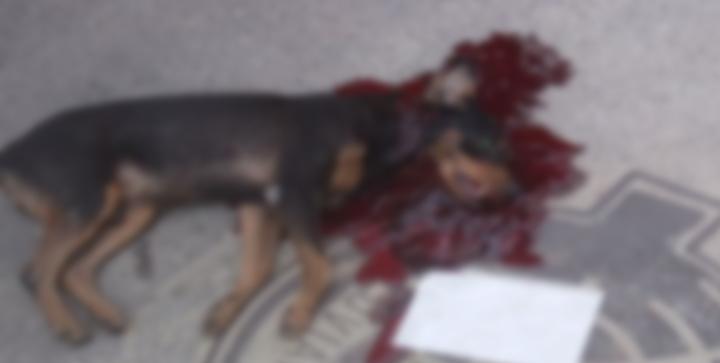 Cachorro é baleado e morto na Fazendinha nesta manhã de sexta-feira (07/04)