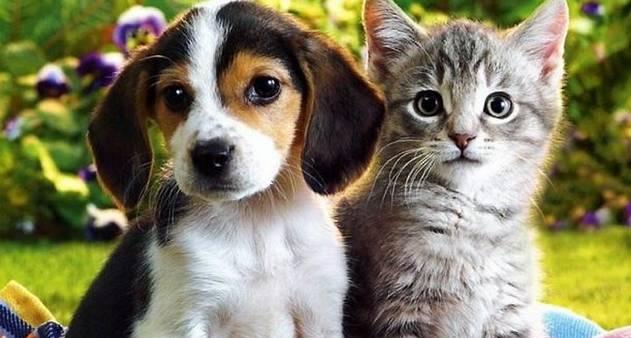 Veja os postos próximos a sua comunidade da campanha contra raiva de cães e gatos