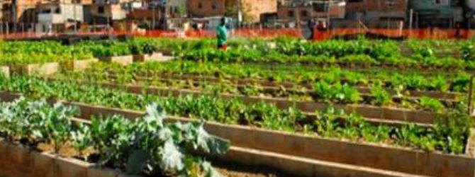 Maior horta comunitária da América Latina oferece mais que frutas e verduras