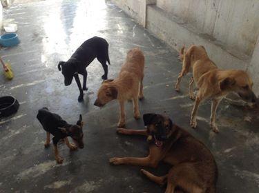 Moradoras denunciam abandono de sete cachorros numa casa em Olaria