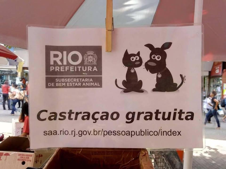 Conheça os pontos de castração gratuita para cães e gatos