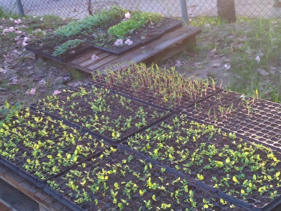 Oficina de jardinagem acontecerá na Vila Kennedy
