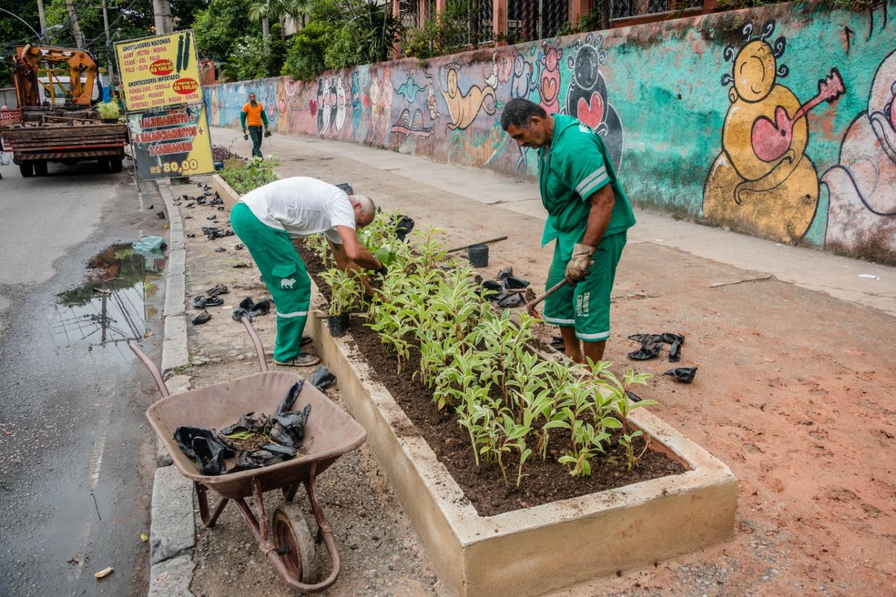 """""""Plantamos Ecsória, Cana do Brejo, Trumbago e Setecresia. Fizemos três blocos de cada espécie e todas são próprias para canteiros. Foto: Renato Moura/Voz das Comunidades"""