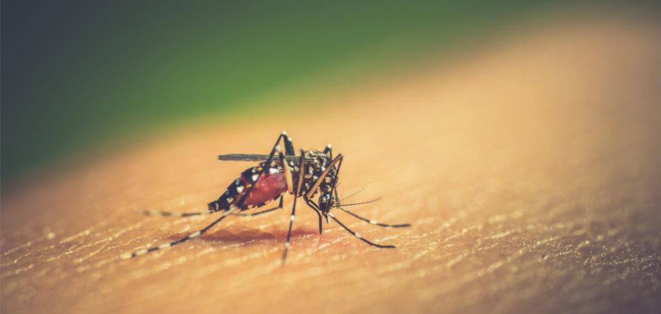Doenças transmitidas por mosquitos afetam comunidades do Rio