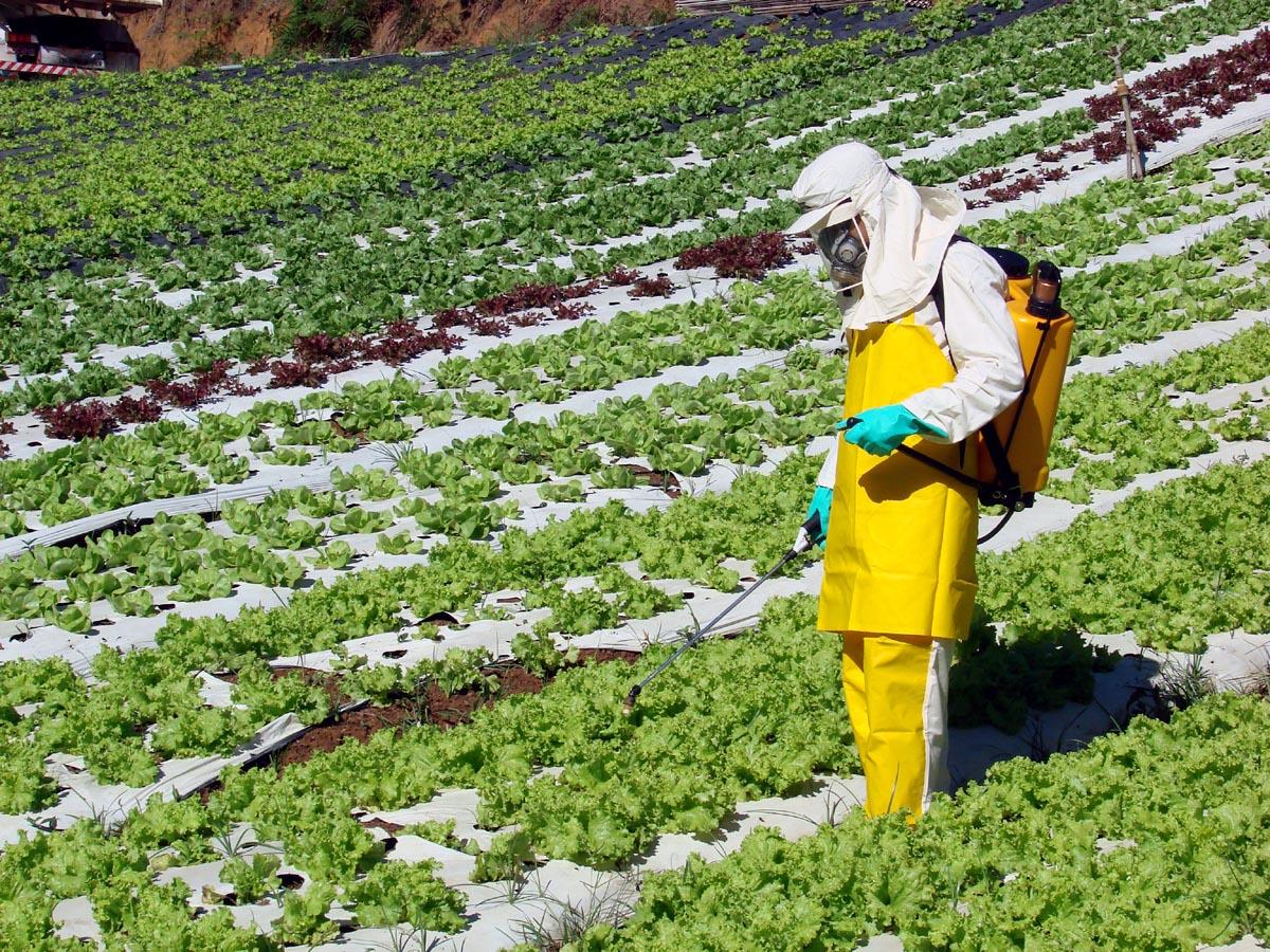 #Opinião: Agrotóxicos e o futuro