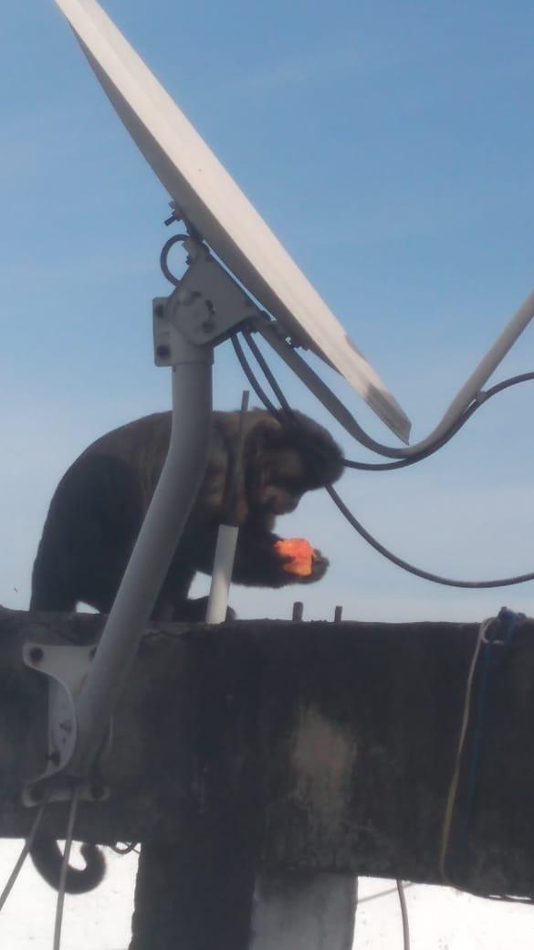 """""""Olha o macaco!"""" Animal aparece em laje de morador da favela Boogie Woogie"""